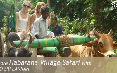 Habarana Village Safari