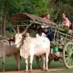 Habarana Village Safari