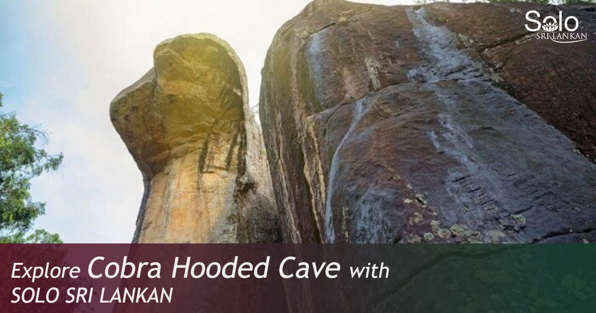 COBRA HOODED CAVE
