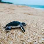 Sea Turtle Hatchery