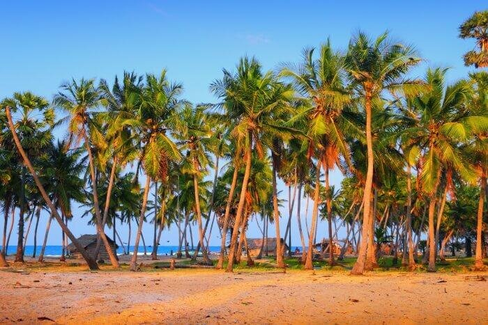 places to visit in Mannar cover